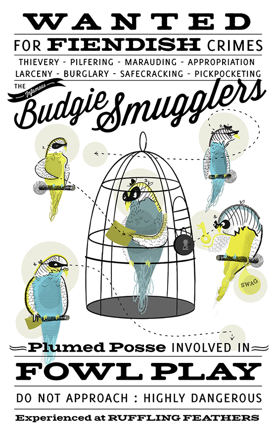 Budgie summglers 560 copy
